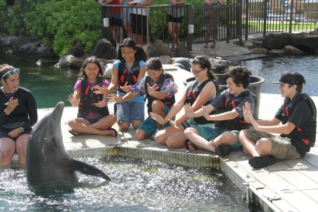 Dolphin Quest Spray Fun